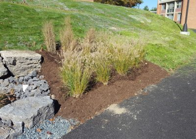 suny stormwater planning 1 400x284 - SUNY Stormwater Plantings