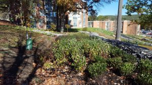 suny stormwater planning 10 300x169 - suny-stormwater-planning-10