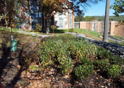 suny stormwater planning 10 400x284 - SUNY Stormwater Plantings