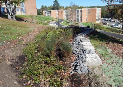 suny stormwater planning 11 400x284 - SUNY Stormwater Plantings