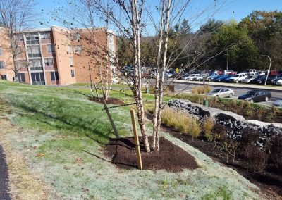suny stormwater planning 2 400x284 - SUNY Stormwater Plantings