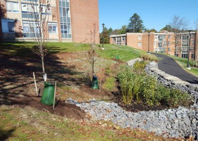 suny stormwater planning 6 400x284 - SUNY Stormwater Plantings