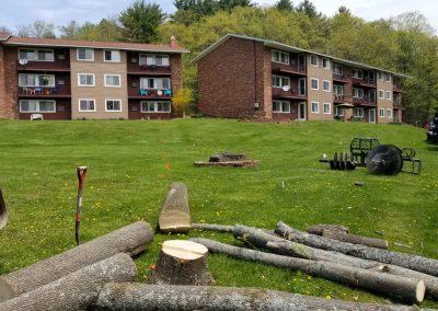 tree felling 400x284 - Apartment Complex Landscape
